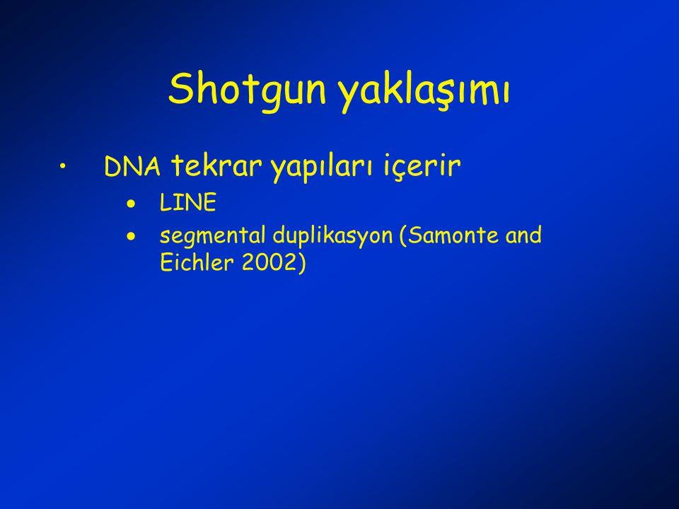 Shotgun yaklaşımı DNA tekrar yapıları içerir  LINE  segmental duplikasyon (Samonte and Eichler 2002)