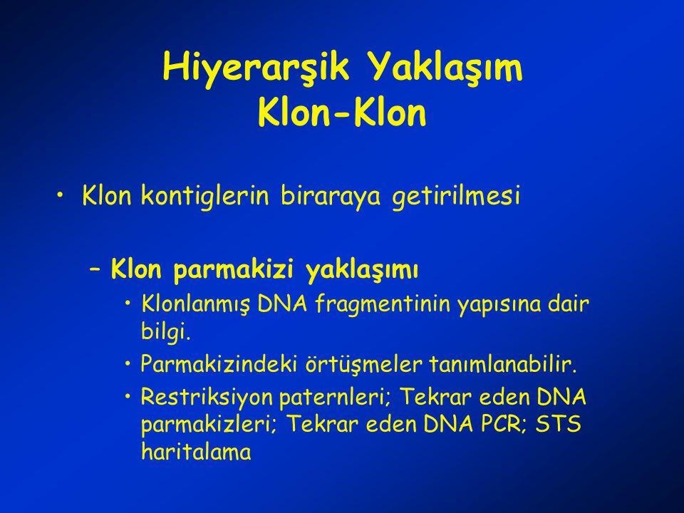 Hiyerarşik Yaklaşım Klon-Klon Klon kontiglerin biraraya getirilmesi –Klon parmakizi yaklaşımı Klonlanmış DNA fragmentinin yapısına dair bilgi.