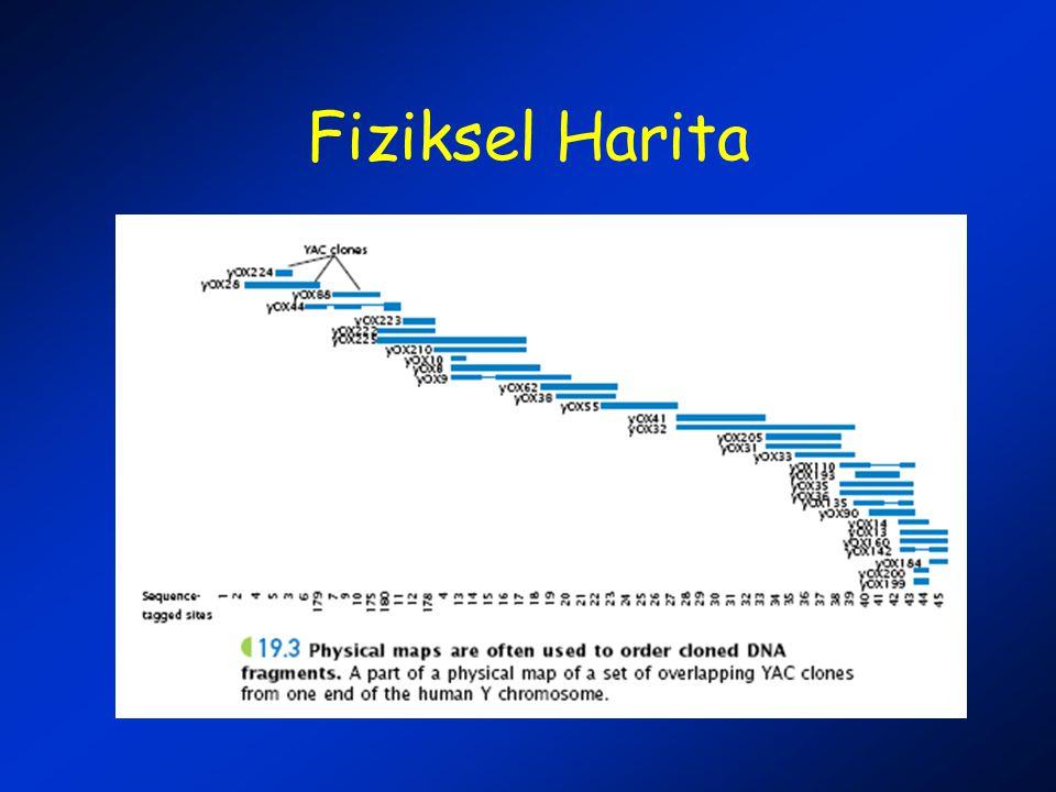 Fiziksel Harita