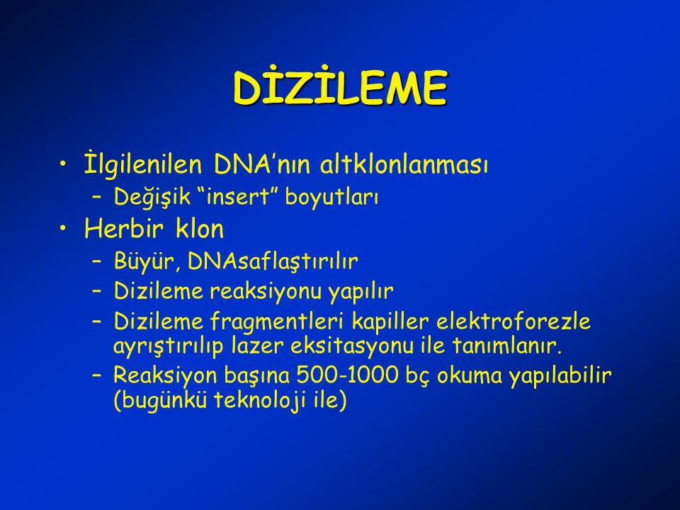 DİZİLEME İlgilenilen DNA'nın altklonlanması –Değişik insert boyutları Herbir klon –Büyür, DNAsaflaştırılır –Dizileme reaksiyonu yapılır –Dizileme fragmentleri kapiller elektroforezle ayrıştırılıp lazer eksitasyonu ile tanımlanır.