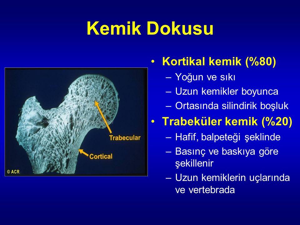 Kemik Dokusu Kortikal kemik (%80) –Yoğun ve sıkı –Uzun kemikler boyunca –Ortasında silindirik boşluk Trabeküler kemik (%20) –Hafif, balpeteği şeklinde –Basınç ve baskıya göre şekillenir –Uzun kemiklerin uçlarında ve vertebrada