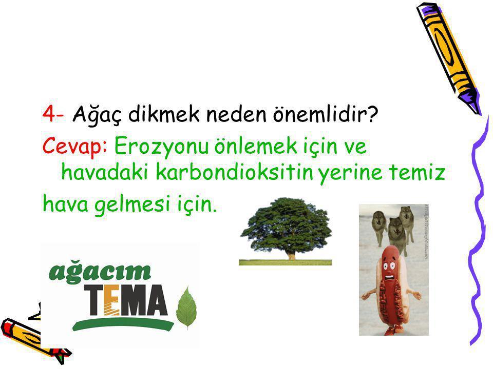 4- Ağaç dikmek neden önemlidir? Cevap: Erozyonu önlemek için ve havadaki karbondioksitin yerine temiz hava gelmesi için.