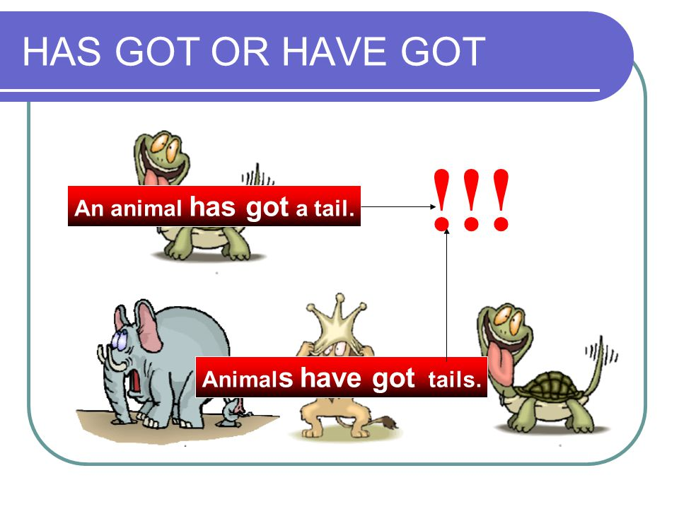 HAS GOT OR HAVE GOT An animal has got a tail. Animal s have got tails. !!!