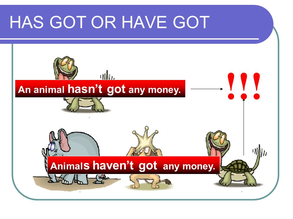 HAS GOT OR HAVE GOT An animal hasn't got any money. Animal s haven't got any money. !!!
