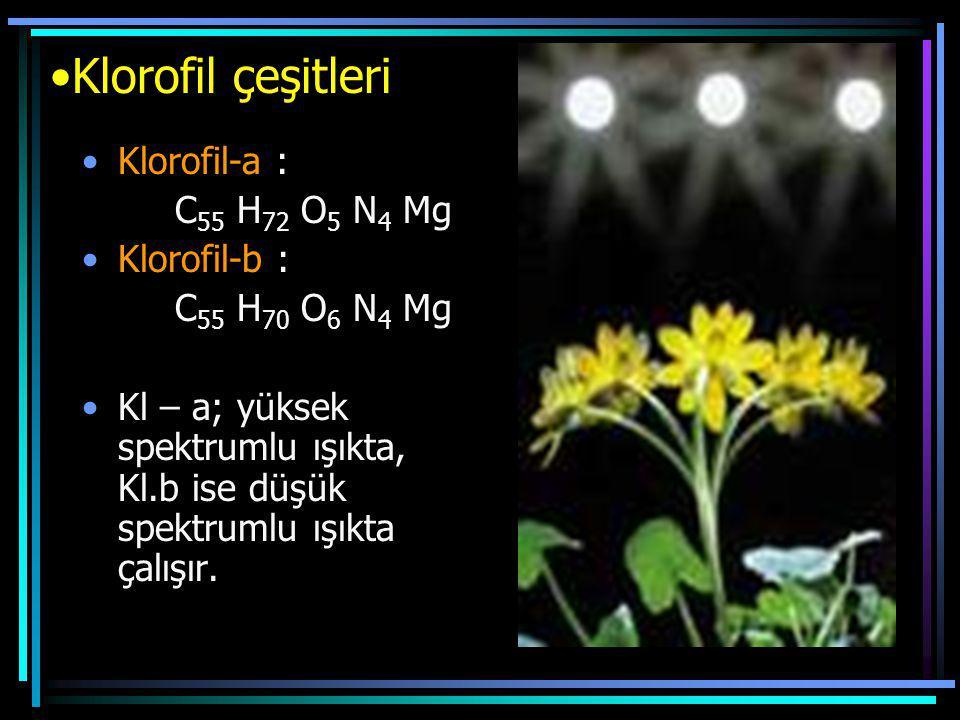 Klorofil çeşitleri Klorofil-a : C 55 H 72 O 5 N 4 Mg Klorofil-b : C 55 H 70 O 6 N 4 Mg Kl – a; yüksek spektrumlu ışıkta, Kl.b ise düşük spektrumlu ışı