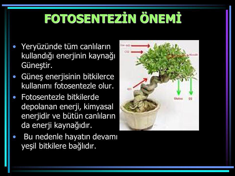 FOTOSENTEZİN ÖNEMİ Yeryüzünde tüm canlıların kullandığı enerjinin kaynağı Güneştir. Güneş enerjisinin bitkilerce kullanımı fotosentezle olur. Fotosent