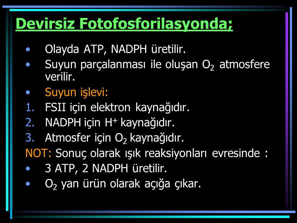 Devirsiz Fotofosforilasyonda; Olayda ATP, NADPH üretilir. Suyun parçalanması ile oluşan O 2 atmosfere verilir. Suyun işlevi: 1.FSII için elektron kayn