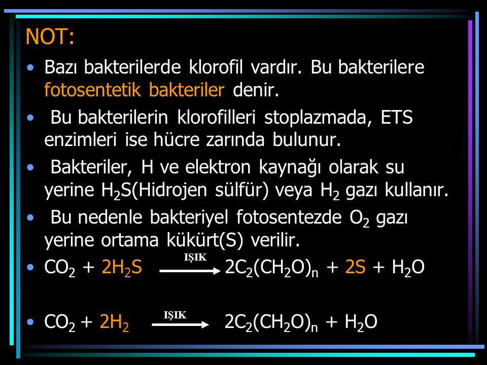 NOT: Bazı bakterilerde klorofil vardır. Bu bakterilere fotosentetik bakteriler denir. Bu bakterilerin klorofilleri stoplazmada, ETS enzimleri ise hücr