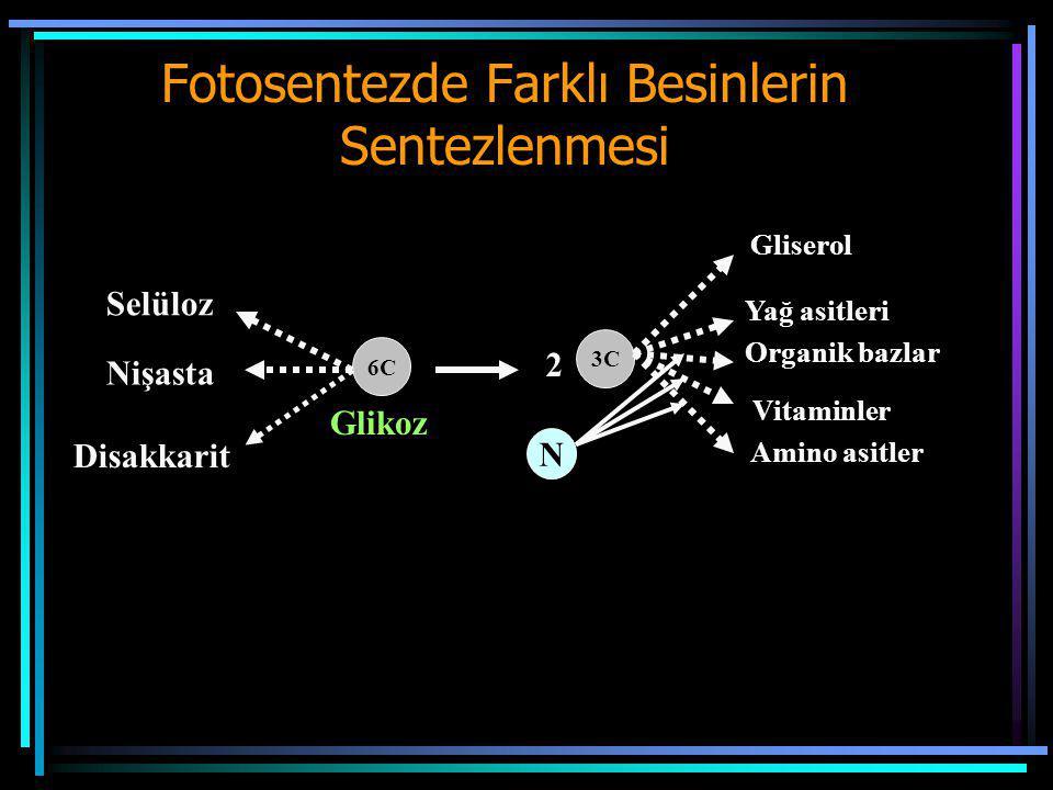 Fotosentezde Farklı Besinlerin Sentezlenmesi Selüloz Nişasta Disakkarit 6C 3C 2 N Gliserol Yağ asitleri Organik bazlar Vitaminler Amino asitler Glikoz