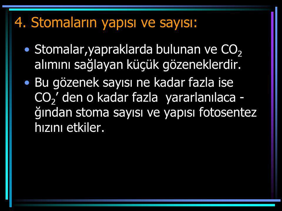4. Stomaların yapısı ve sayısı: Stomalar,yapraklarda bulunan ve CO 2 alımını sağlayan küçük gözeneklerdir. Bu gözenek sayısı ne kadar fazla ise CO 2 '