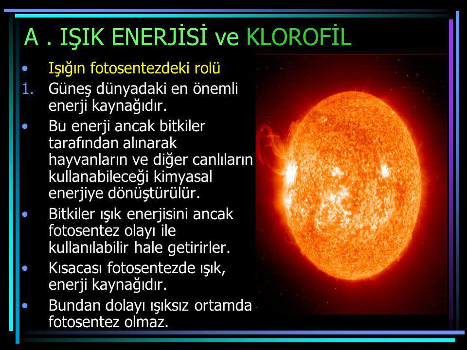 A. IŞIK ENERJİSİ ve KLOROFİL Işığın fotosentezdeki rolü 1.Güneş dünyadaki en önemli enerji kaynağıdır. Bu enerji ancak bitkiler tarafından alınarak ha