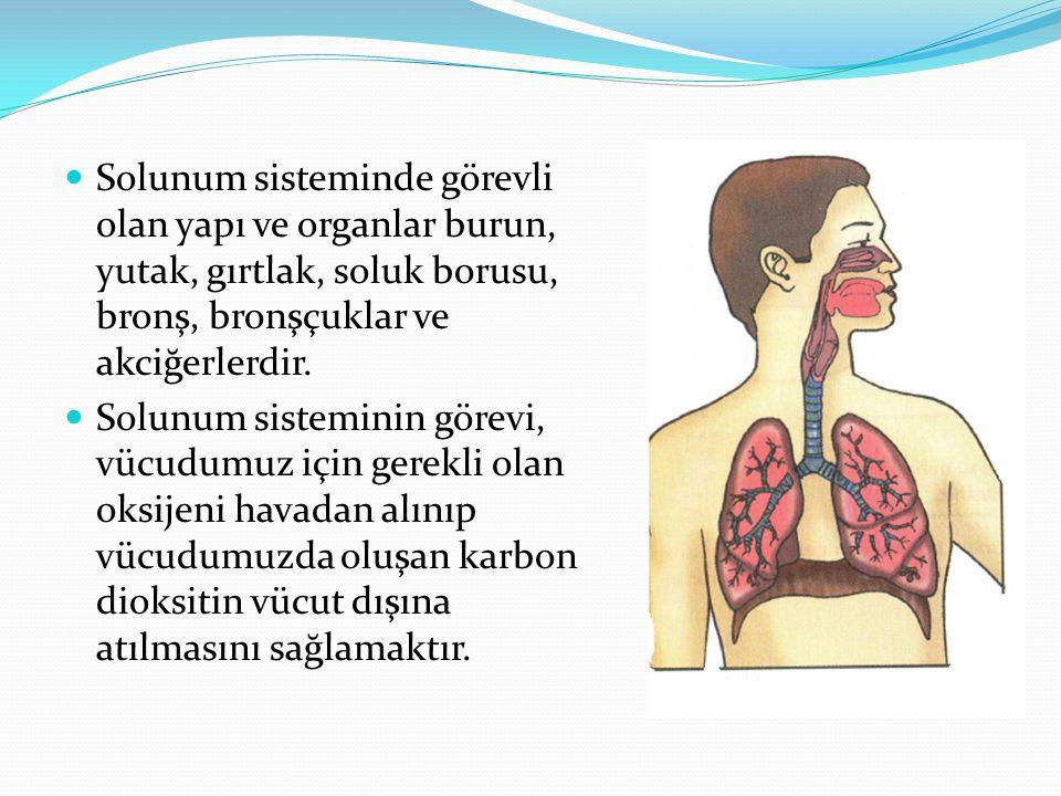 Solunum sisteminde görevli olan yapı ve organlar burun, yutak, gırtlak, soluk borusu, bronş, bronşçuklar ve akciğerlerdir. Solunum sisteminin görevi,