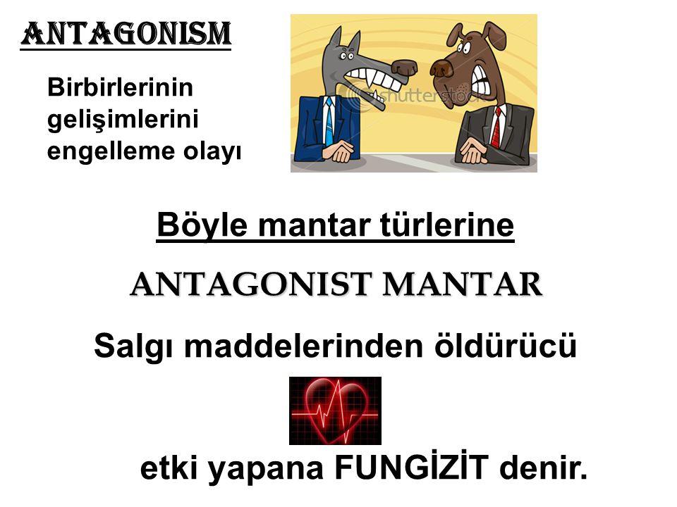 Antagonism Birbirlerinin gelişimlerini engelleme olayı Böyle mantar türlerine ANTAGONIST MANTAR Salgı maddelerinden öldürücü etki yapana FUNGİZİT deni