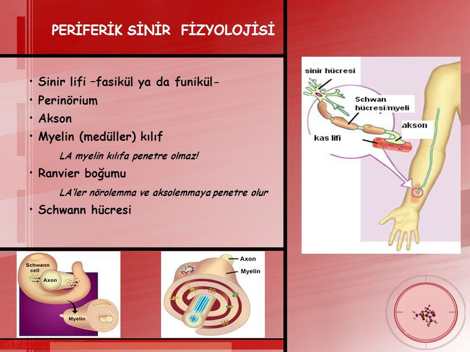 PERİFERİK SİNİR FİZYOLOJİSİ Sinir lifi –fasikül ya da funikül- Perinörium Akson Myelin (medüller) kılıf LA myelin kılıfa penetre olmaz.