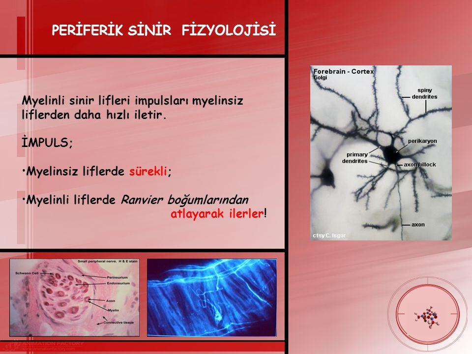 PERİFERİK SİNİR FİZYOLOJİSİ Myelinli sinir lifleri impulsları myelinsiz liflerden daha hızlı iletir.