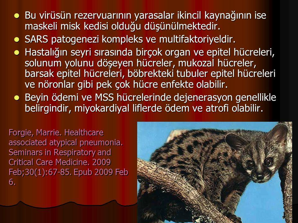 Bu virüsün rezervuarının yarasalar ikincil kaynağının ise maskeli misk kedisi olduğu düşünülmektedir.