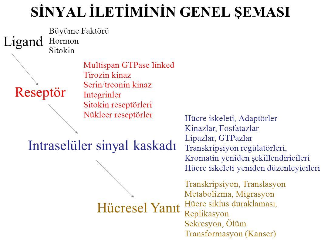 Sinyal Yolakları -genel-