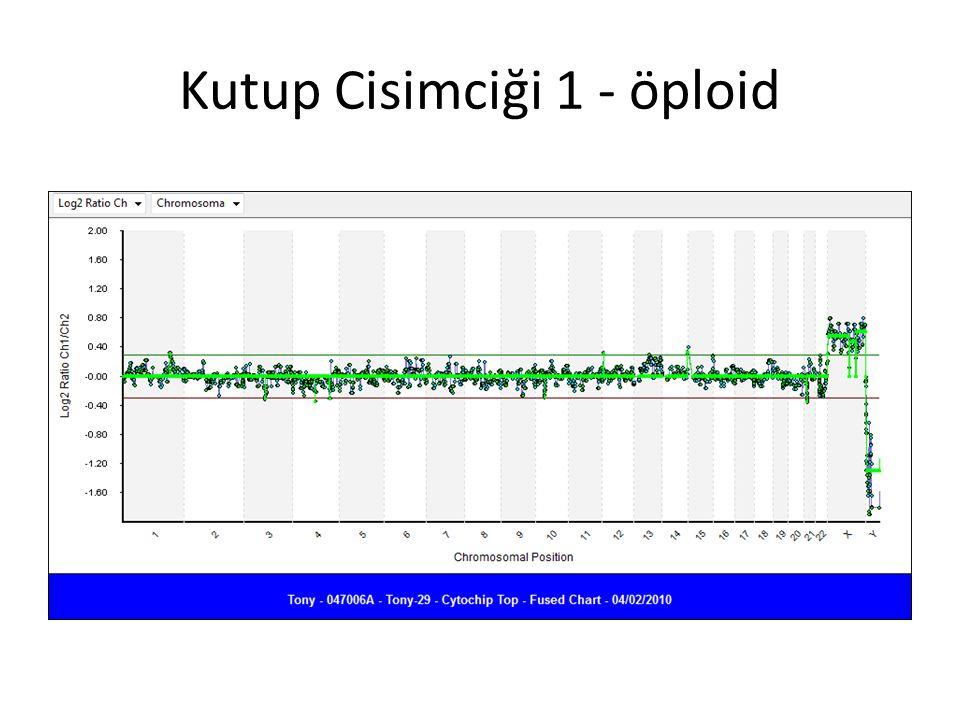 Kutup Cisimciği 1 - öploid