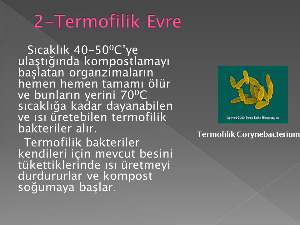 Sıcaklık 40-50 0 C'ye ulaştığında kompostlamayı başlatan organzimaların hemen hemen tamamı ölür ve bunların yerini 70 0 C sıcaklığa kadar dayanabilen