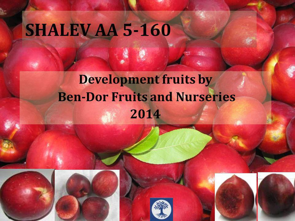 SHALEV AA 5-160 Development fruits by Ben-Dor Fruits and Nurseries 2014