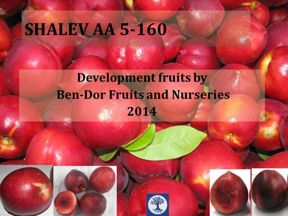 SHALEV AA 5-160 Note, descriptionBrix %Ebat mm Tatlı, iyi, Ekşi Değil1665-70 Hasat Zamanı Çiçeklenme VerimSoğuklanma Süresi 15/8full200-1000 Fruit Data Tree Data