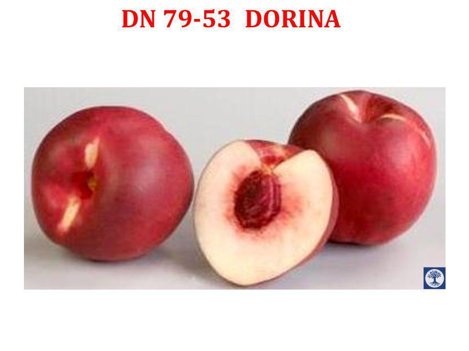 DN 79-53 DORINA
