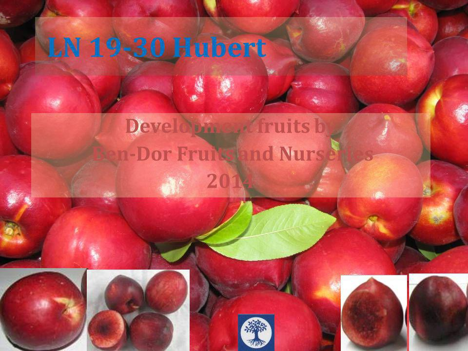 Development fruits by Ben-Dor Fruits and Nurseries 2014 LN 19-30 Hubert
