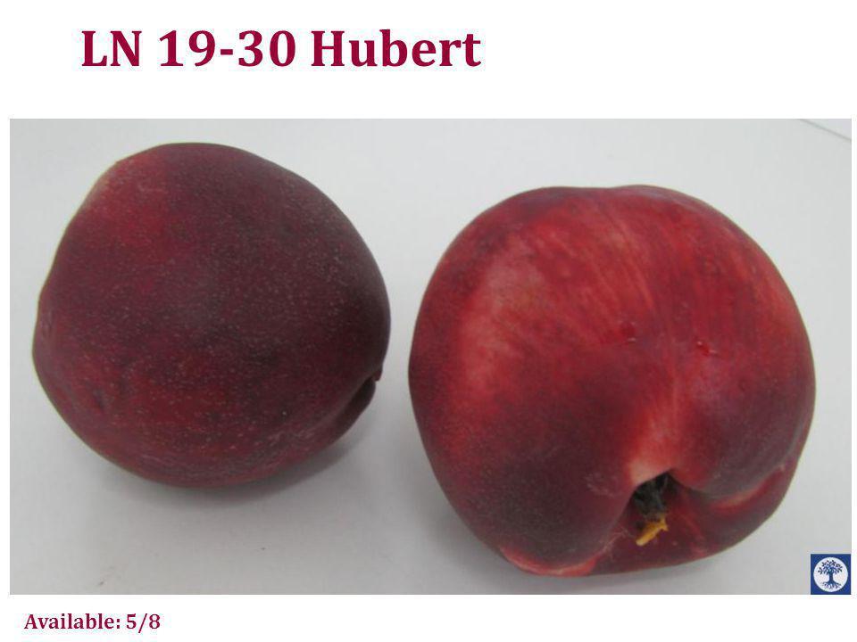 LN 19-30 Hubert
