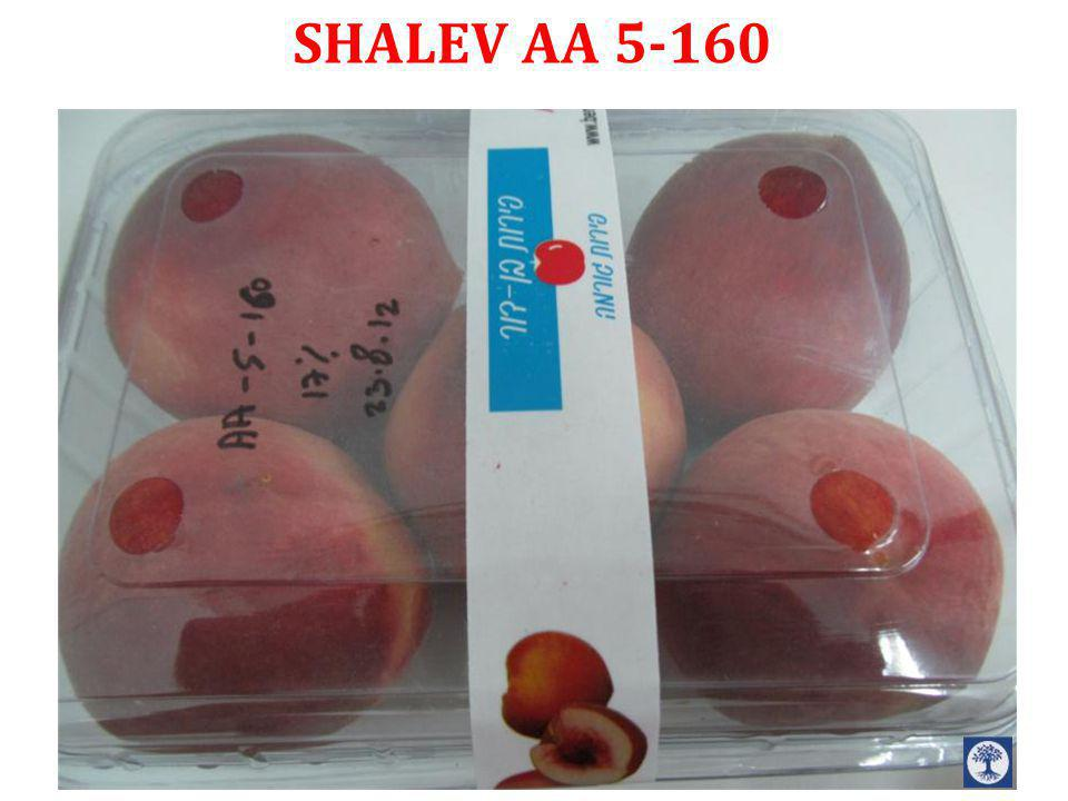 SHALEV AA 5-160