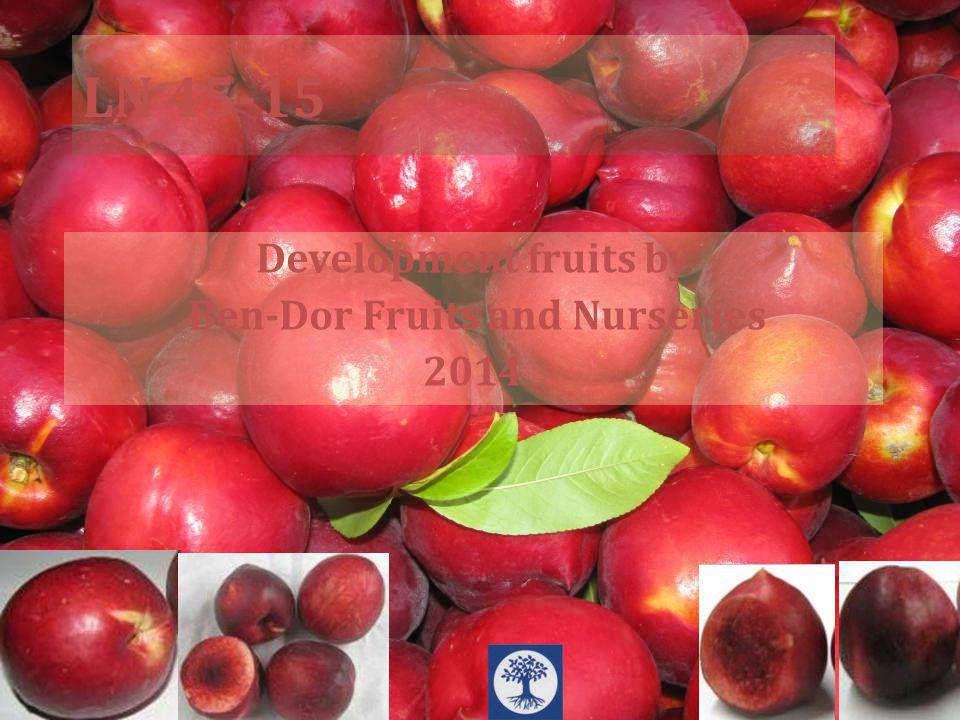 LN 45-15 Development fruits by Ben-Dor Fruits and Nurseries 2014