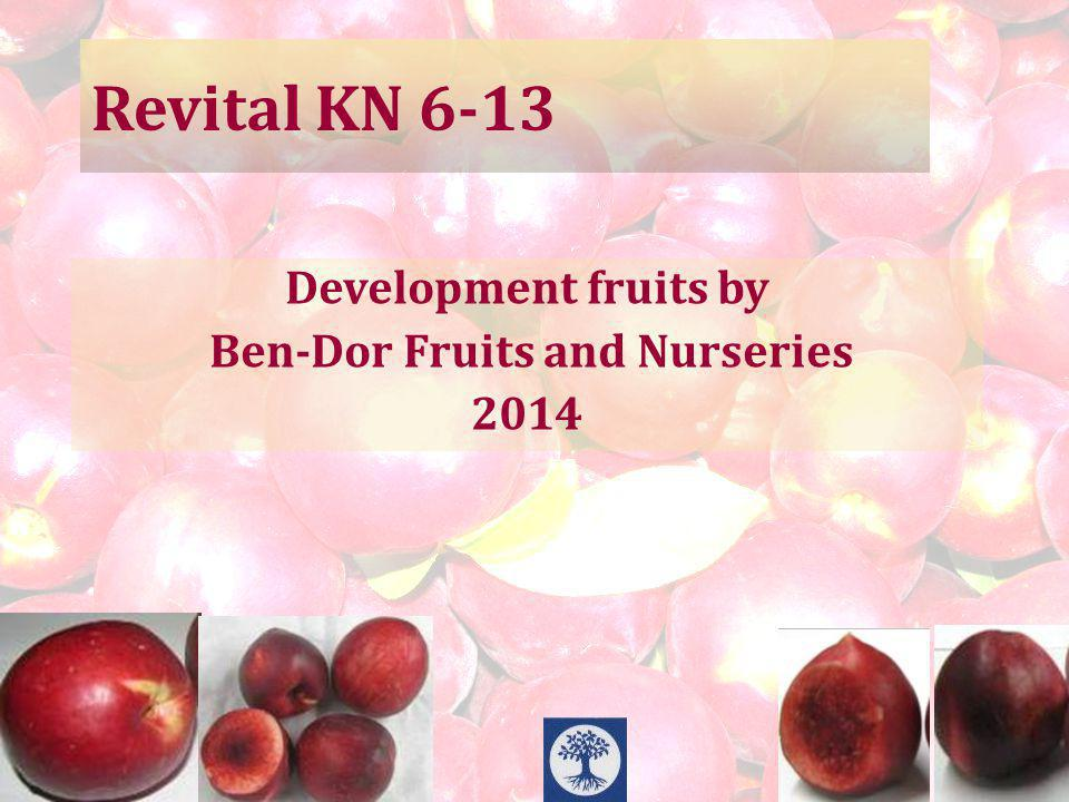 Revital KN 6-13 Development fruits by Ben-Dor Fruits and Nurseries 2014