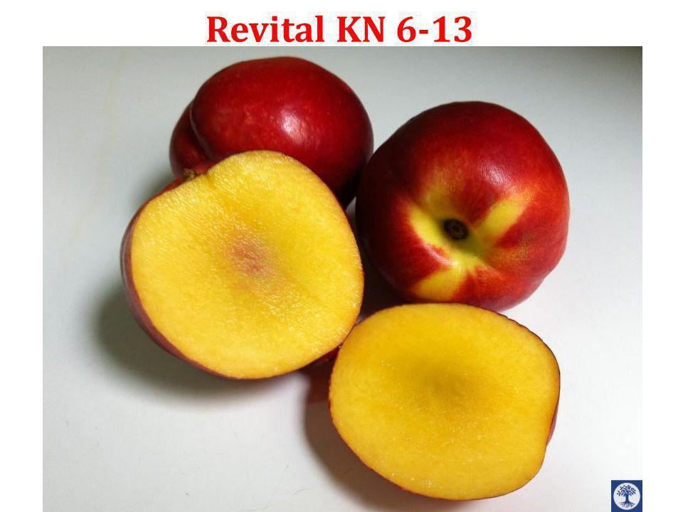 Revital KN 6-13