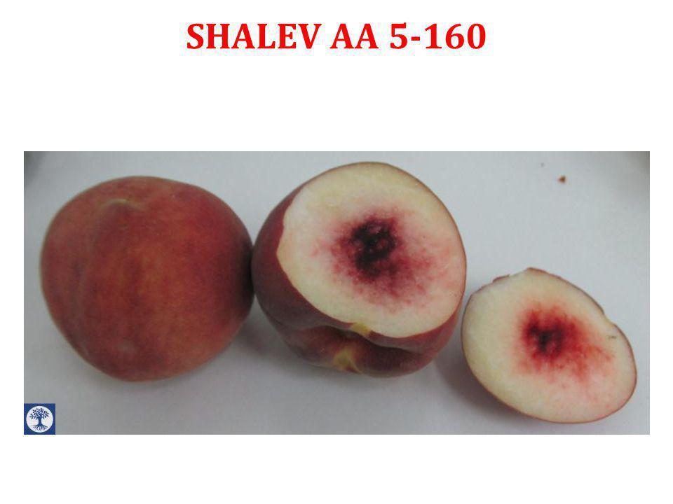 CN 9-49 Development fruits by Ben-Dor Fruits and Nurseries 2014