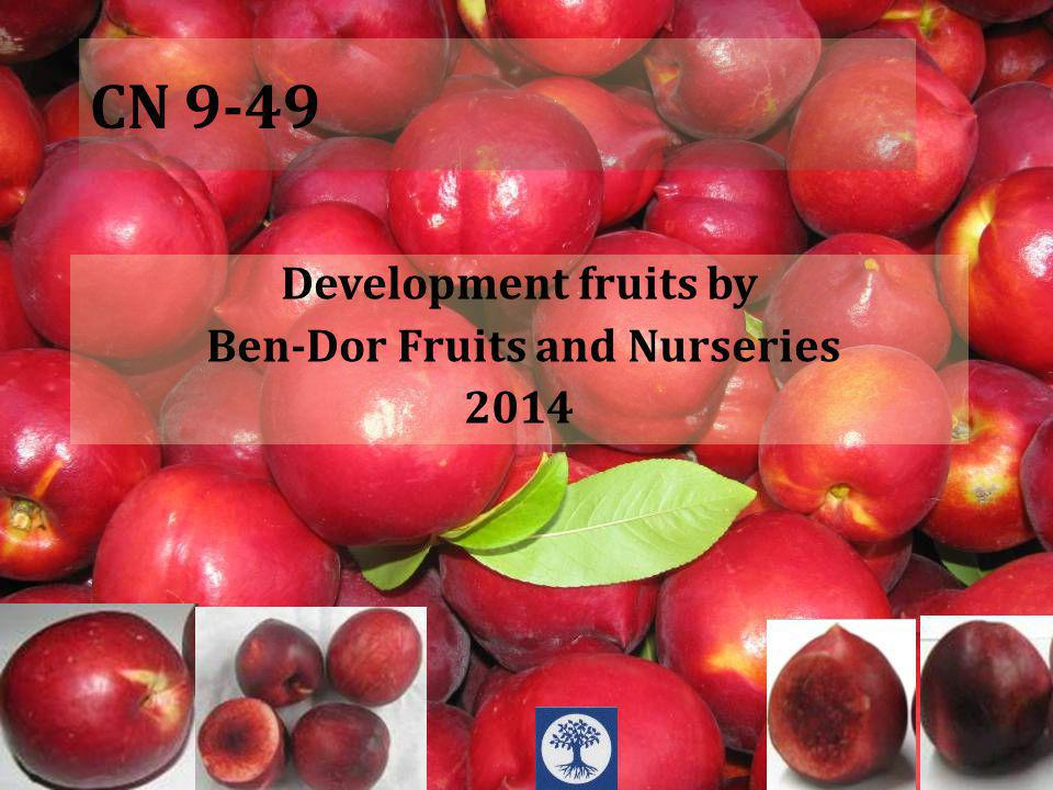 CN 9-49 Development fruits by Ben-Dor Fruits and Nurseries 2014