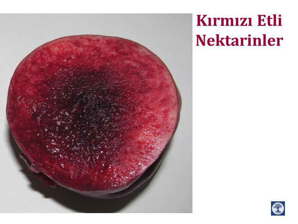 Note, descriptionBrix %Ebat mm Hasat Zamanı VerimVariety Tatlı, firm, hazy, a closed suture1865-705/9MediumCN 9-49