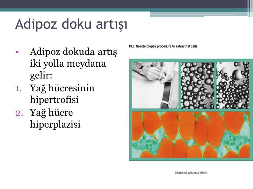 Adipoz doku artışı Adipoz dokuda artış iki yolla meydana gelir: 1.Yağ hücresinin hipertrofisi 2.Yağ hücre hiperplazisi