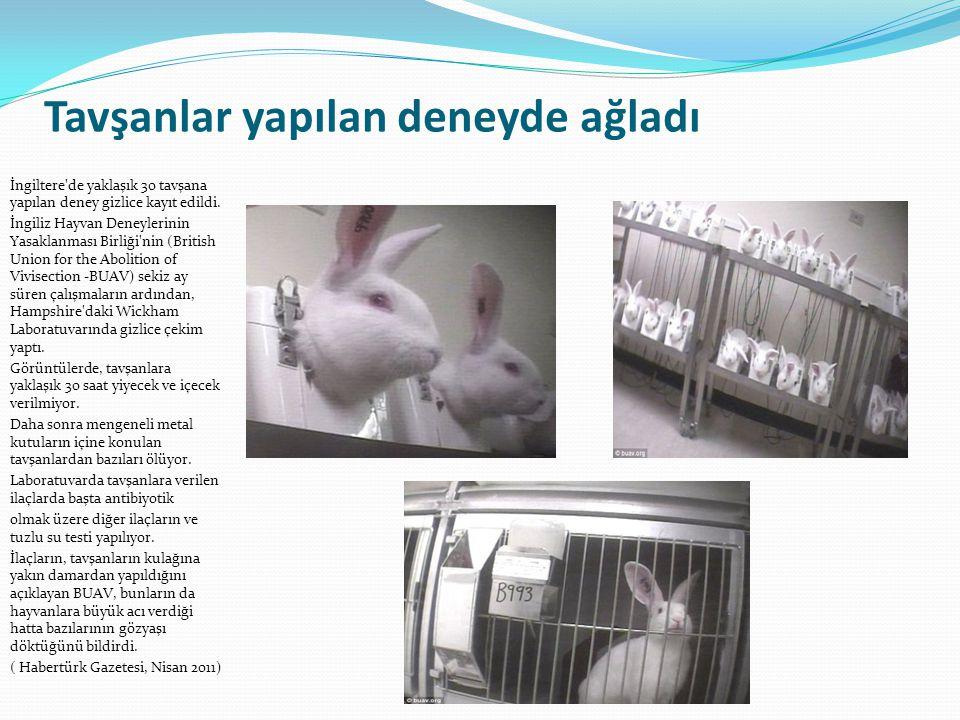 Tavşanlar yapılan deneyde ağladı İngiltere'de yaklaşık 30 tavşana yapılan deney gizlice kayıt edildi. İngiliz Hayvan Deneylerinin Yasaklanması Birliği