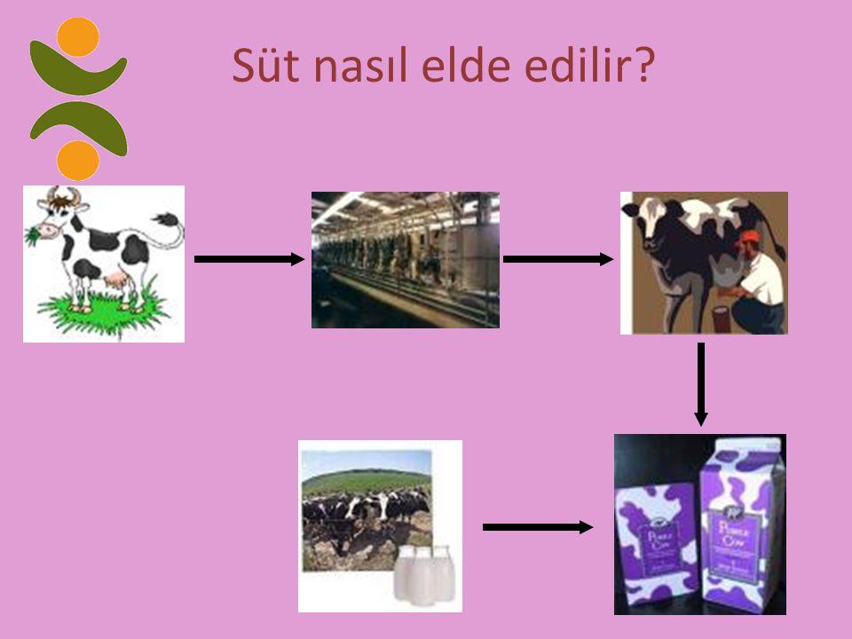 Süt nasıl elde edilir?