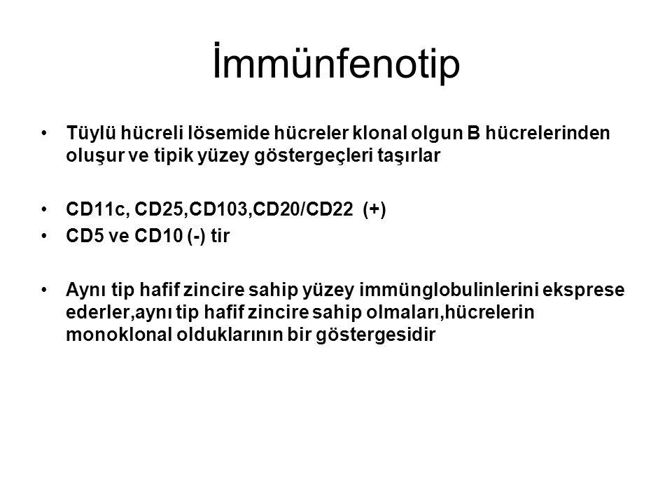 İmmünfenotip Tüylü hücreli lösemide hücreler klonal olgun B hücrelerinden oluşur ve tipik yüzey göstergeçleri taşırlar CD11c, CD25,CD103,CD20/CD22 (+)
