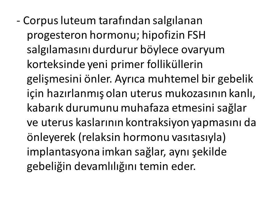 - Corpus luteum tarafından salgılanan progesteron hormonu; hipofizin FSH salgılamasını durdurur böylece ovaryum korteksinde yeni primer folliküllerin