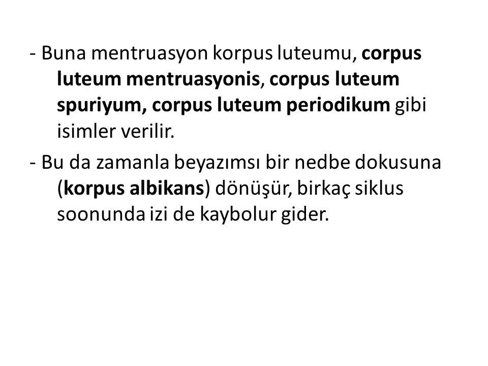 - Buna mentruasyon korpus luteumu, corpus luteum mentruasyonis, corpus luteum spuriyum, corpus luteum periodikum gibi isimler verilir. - Bu da zamanla