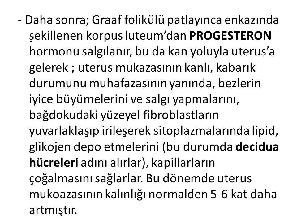 - Daha sonra; Graaf folikülü patlayınca enkazında şekillenen korpus luteum'dan PROGESTERON hormonu salgılanır, bu da kan yoluyla uterus'a gelerek ; ut