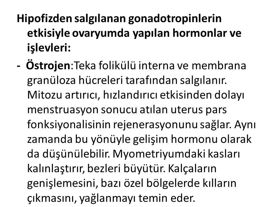 Hipofizden salgılanan gonadotropinlerin etkisiyle ovaryumda yapılan hormonlar ve işlevleri: - Östrojen:Teka folikülü interna ve membrana granüloza hüc