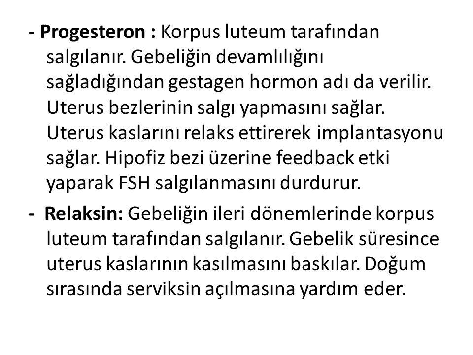 - Progesteron : Korpus luteum tarafından salgılanır. Gebeliğin devamlılığını sağladığından gestagen hormon adı da verilir. Uterus bezlerinin salgı yap