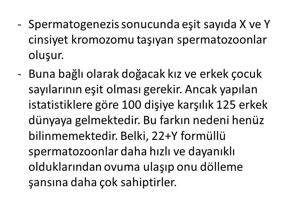-Spermatogenezis sonucunda eşit sayıda X ve Y cinsiyet kromozomu taşıyan spermatozoonlar oluşur. -Buna bağlı olarak doğacak kız ve erkek çocuk sayılar