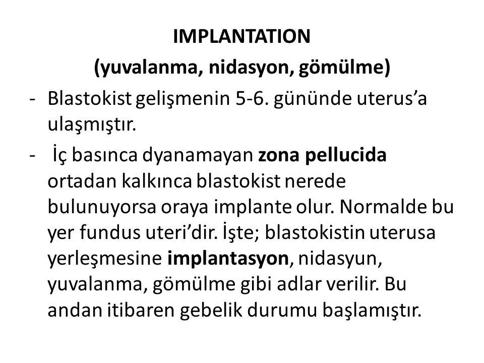 IMPLANTATION (yuvalanma, nidasyon, gömülme) -Blastokist gelişmenin 5-6. gününde uterus'a ulaşmıştır. - İç basınca dyanamayan zona pellucida ortadan ka