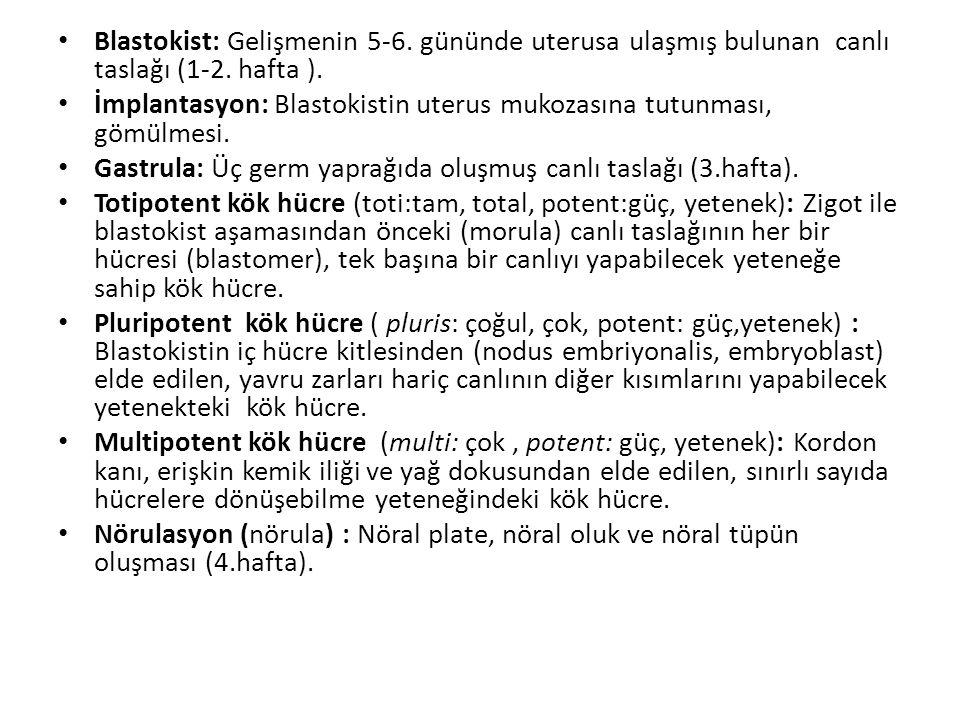 Blastokist: Gelişmenin 5-6. gününde uterusa ulaşmış bulunan canlı taslağı (1-2. hafta ). İmplantasyon: Blastokistin uterus mukozasına tutunması, gömül