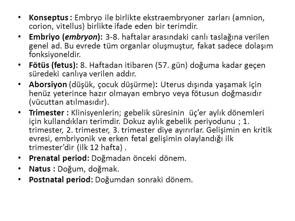 Konseptus : Embryo ile birlikte ekstraembryoner zarları (amnion, corion, vitellus) birlikte ifade eden bir terimdir. Embriyo (embryon): 3-8. haftalar