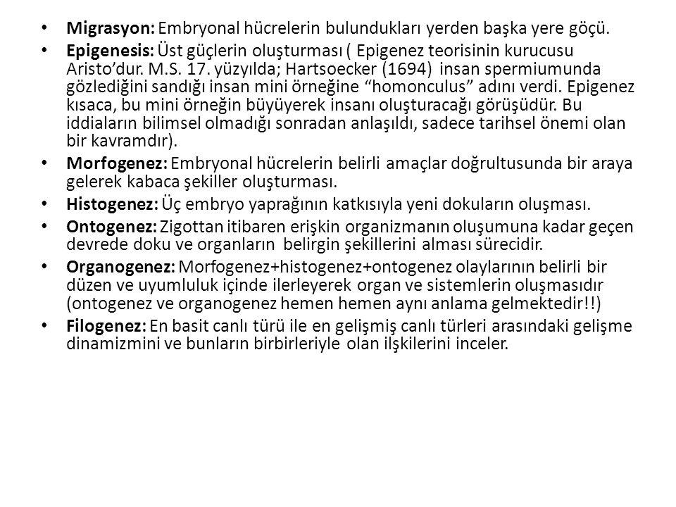 Migrasyon: Embryonal hücrelerin bulundukları yerden başka yere göçü. Epigenesis: Üst güçlerin oluşturması ( Epigenez teorisinin kurucusu Aristo'dur. M