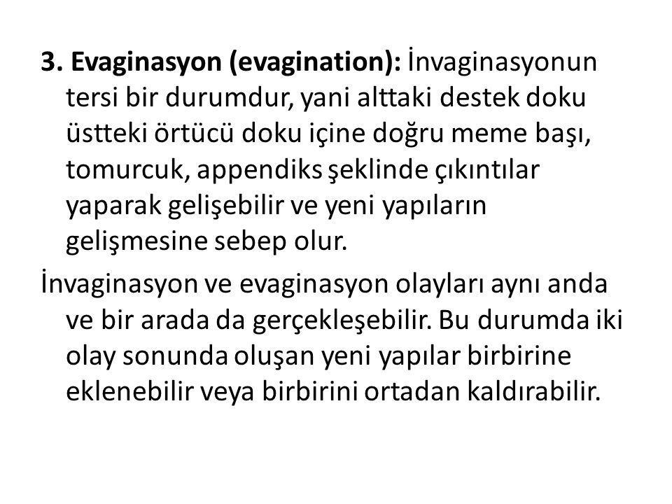 3. Evaginasyon (evagination): İnvaginasyonun tersi bir durumdur, yani alttaki destek doku üstteki örtücü doku içine doğru meme başı, tomurcuk, appendi